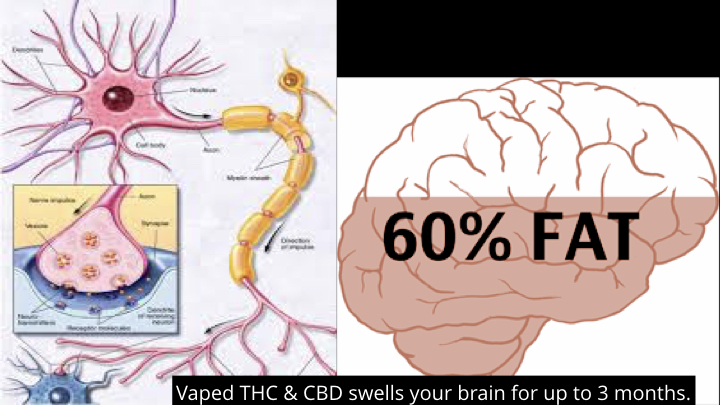 THC and CBD in the Brain