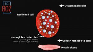 Red Blood Cells with Hemoglobin a1c